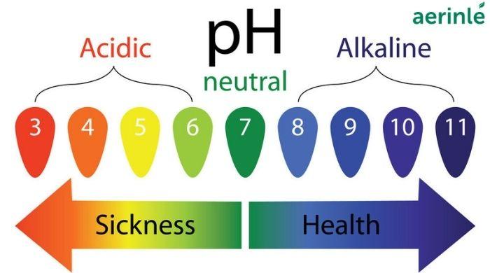 Axit và kiềm trong cơ thể có ảnh hưởng gì?